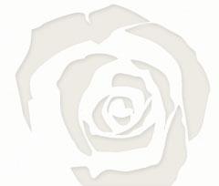rosa cacalupi
