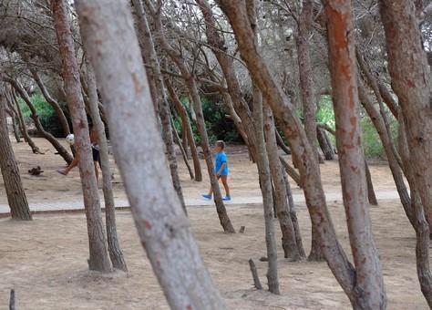 La pineta di Punta della Suina